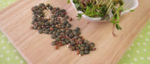 Семена для микрогрина